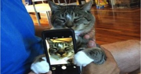caturday cat selfie kitty adorable