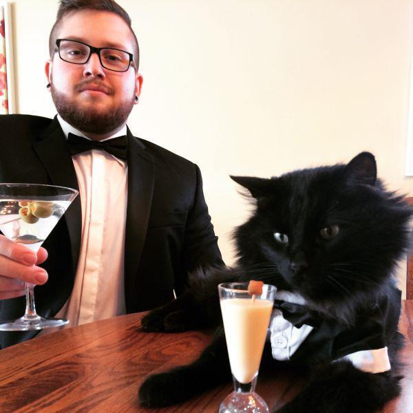 caturday fancy cats in suits