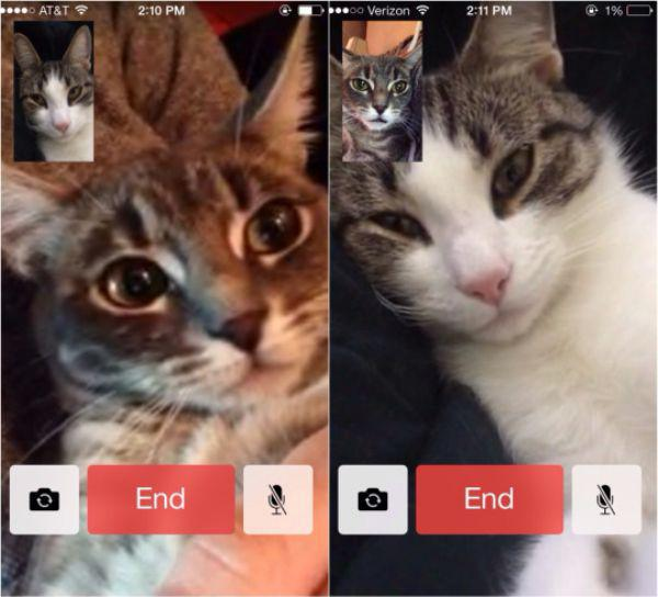 caturday kitten facetime iphone