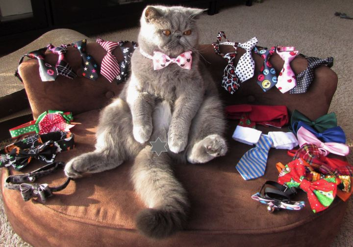 grey furball blue chip impressive tie collection