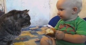 adorable cat and baby dinner for two