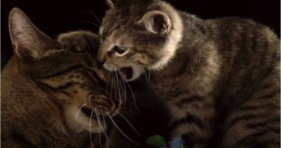 awesome cats in slow motion cathletes