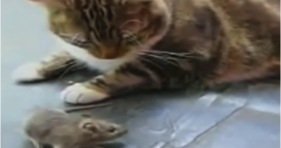 cats and kittens scared of birds and mice