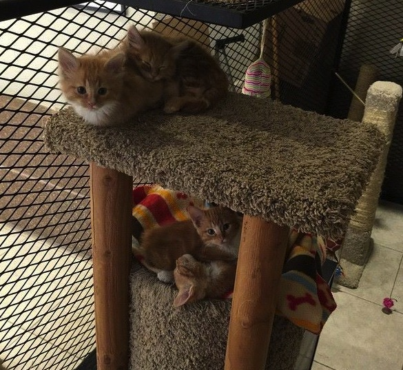 cute kittens in cat library condo