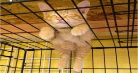 epic adorable kitty cat nap cute ginger kitten
