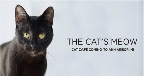 the cat's meow cafe ann arbor michigan