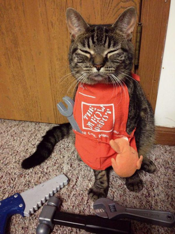 the home depot cat caturday