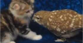 adorable kitten and owlet best friend duo