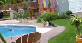 cat pushes cat
