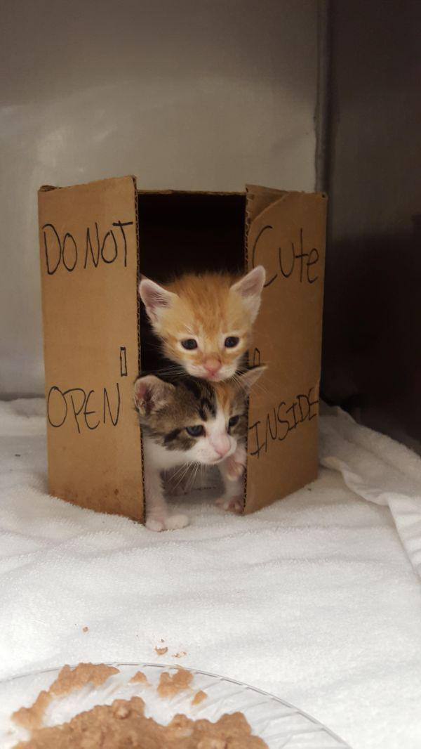 caturday adorable kittens in boxes