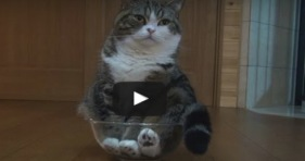 caturday maru in a bowl adorable