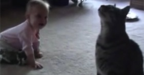 funny comedian cat makes baby laugh