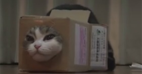 maru the cat loves boxes of all shapes and sizes