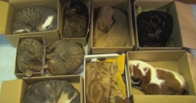 organize cats with cardboard boxes