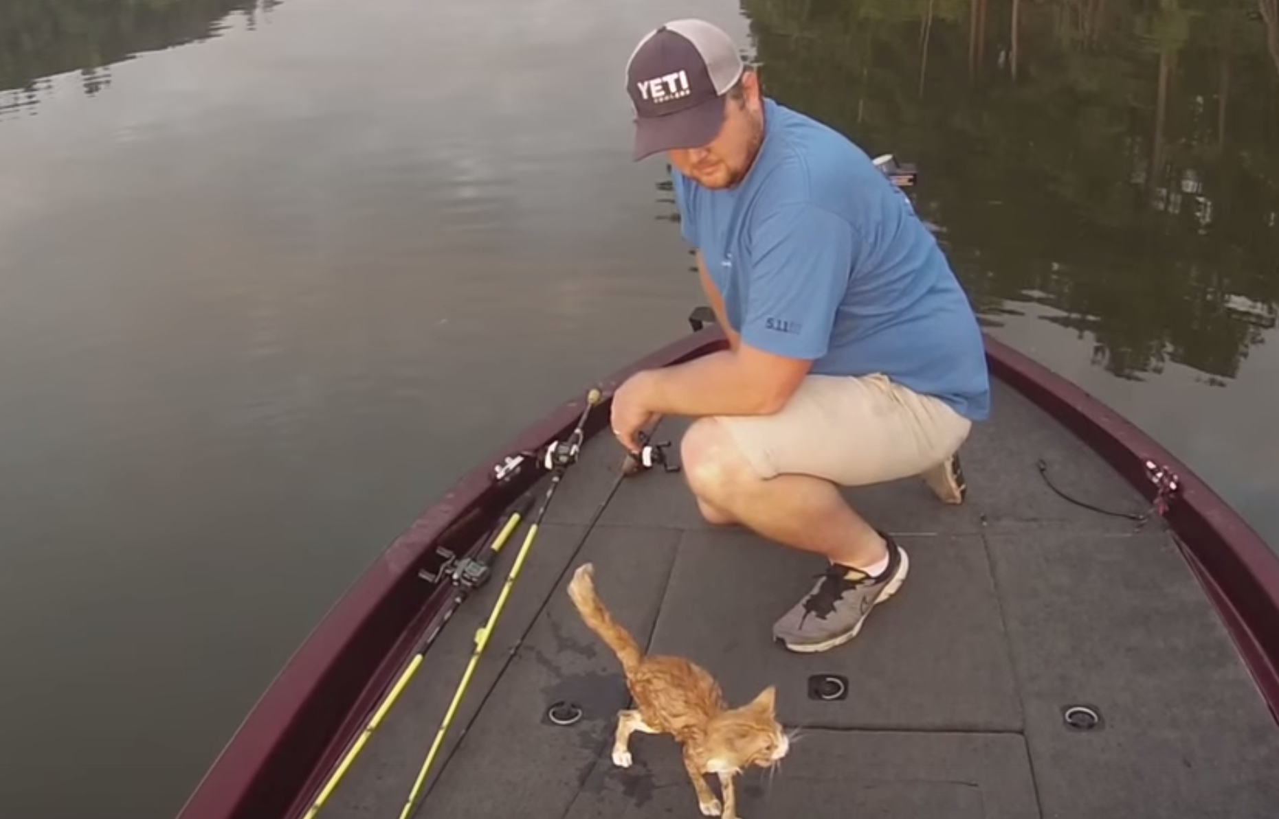 Guys rescue kittens give new meaning to the term for What does cat fishing mean