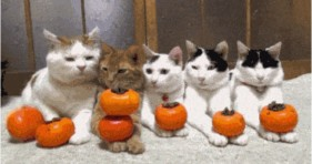 caturday funny pumpkin cats