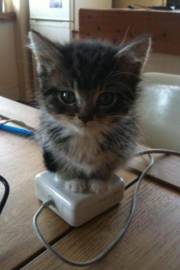 caturday kitten charging station