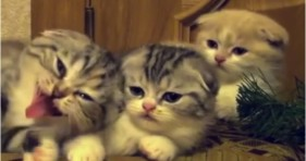 yawning kittens are adorably contagious