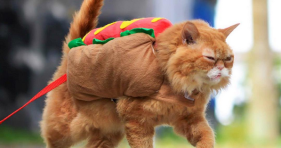 cat in a hot dog halloween costume