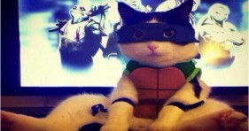 adorable caturday ninja turtle cat