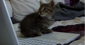 adorable keyboard kitten playing