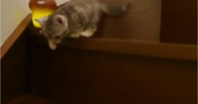 adorable kitten bravely climbs down stairs