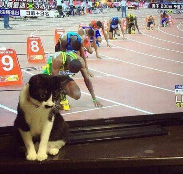 caturday cathlete cute sprinter
