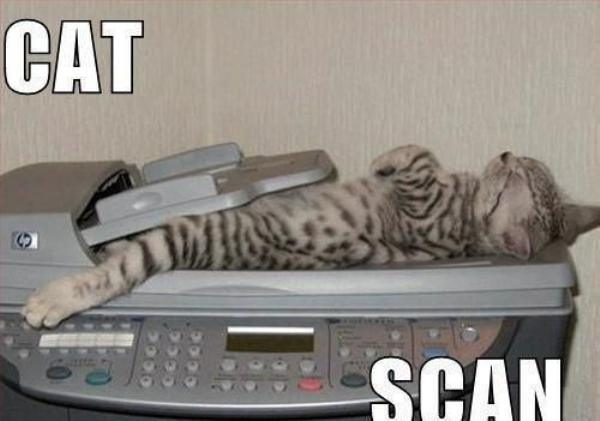caturday cute sleepy cat scan