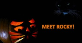 meet rocky the magnificent 7 cats interview
