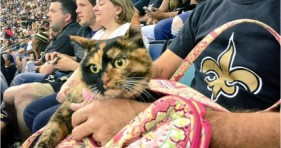 nfl game who cat loves new orleans saints