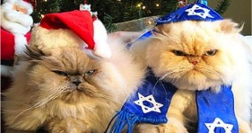 holiday cats christmas and hanukkah kittens