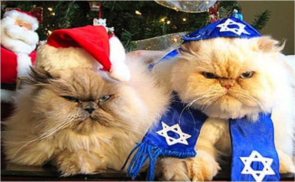 celebrate caturday with holiday cats cats vs cancer