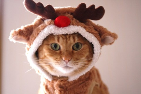 Image result for cats and hannukah