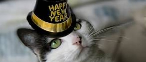 black and white cat 2016 happy new year