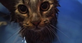 adorable cats bath time