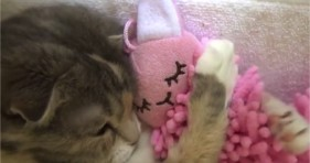 adorable kitten hugs pink doll