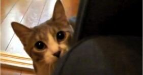 adorable stalking cat is all sorts of cute
