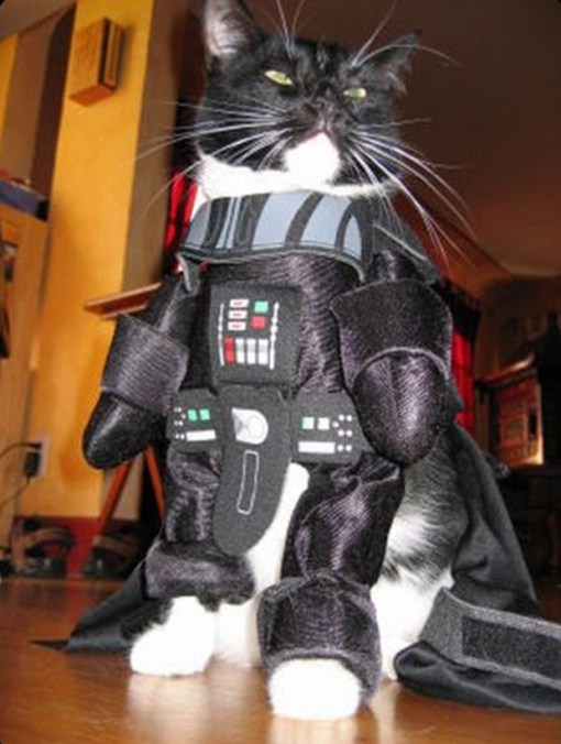 caturday cute cats darth vader