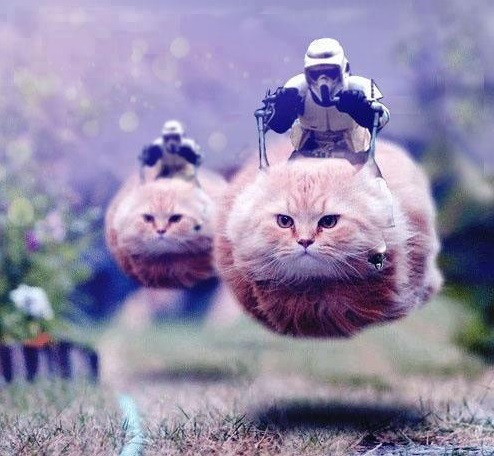 funny star wars speeder bike cats lolcats