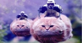 funny star wars storm trooper cats