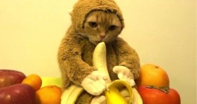 adorable cat monkey eating a banana