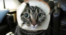 bread cat