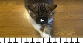 how a cat plays the piano