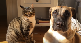cat loves dog