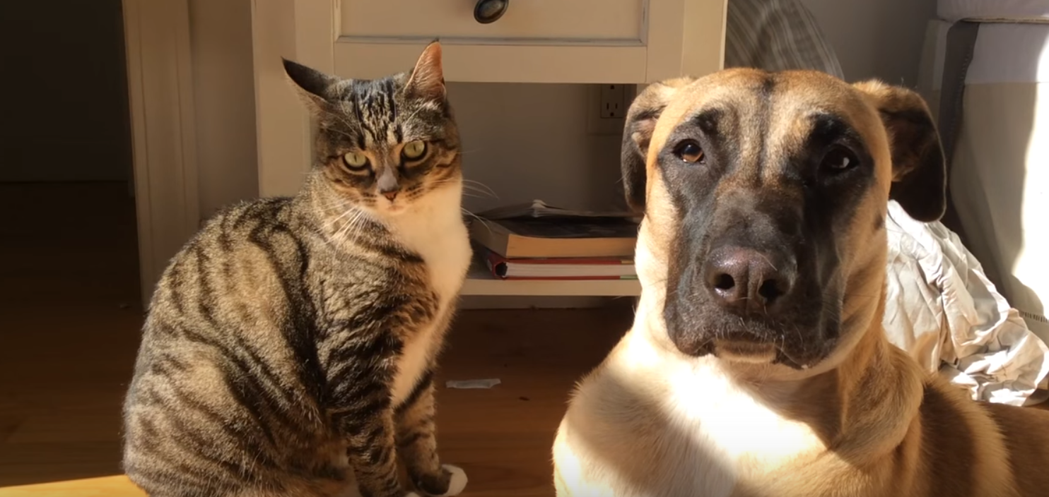 First Night With Puppy >> The Evolution of a Cat and Dog Friendship - Cats vs Cancer