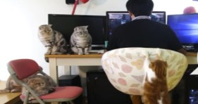 fluffy cats remind human when it's mealtime