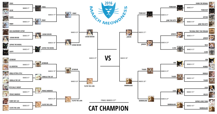 Cat-Madness-Tourney-2016-Final-4