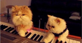 caturday music cats lolcats