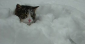elaine the cat loves the snow