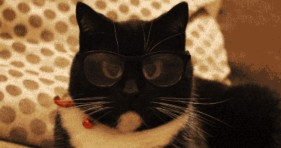 adorable caturday nerdy cat glasses lolcats